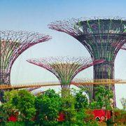 du-lich-singapore-garden-by-the-bay-avitour